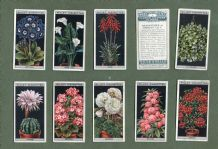 Collectable cigarette cards set Flower Culture in Pots, 1925